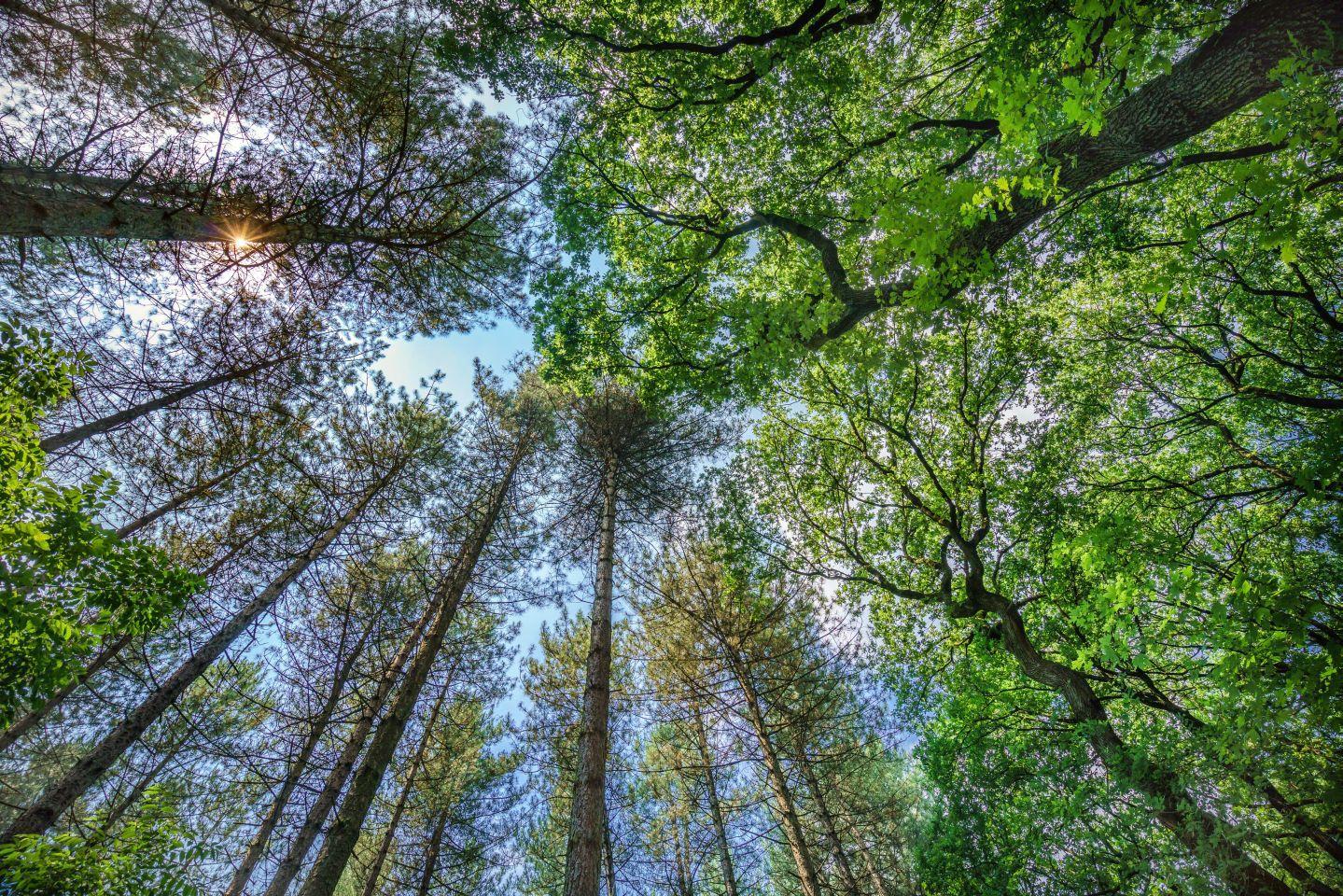 Aktion Klimabäume