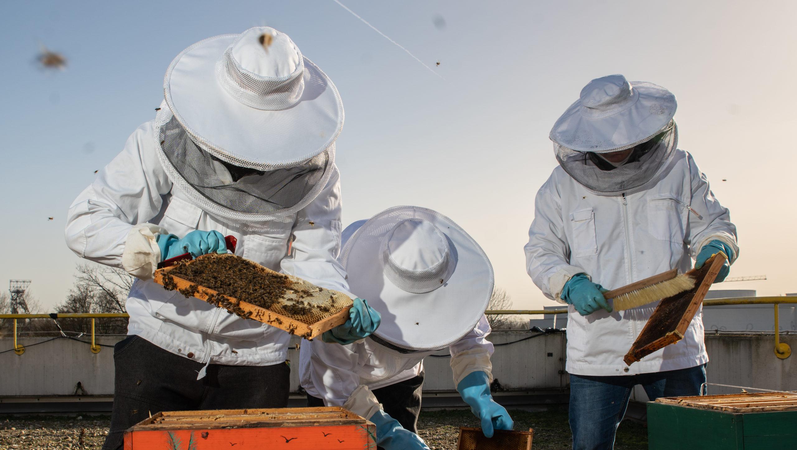 Wo fleißige Bienen flott machen - mit Bildergalerie